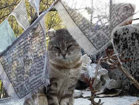Cat, Cute, Cat Eyes, Animal, Domestic Animal, Feline