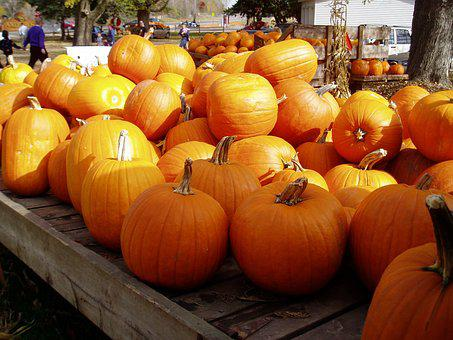 Pumpkins, Fall, Garden, Harvest, Jack-o-lantern, Autumn