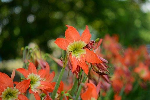 Tulip, Flora, Garden, Vibrant, Flower, Fresh, Blossom