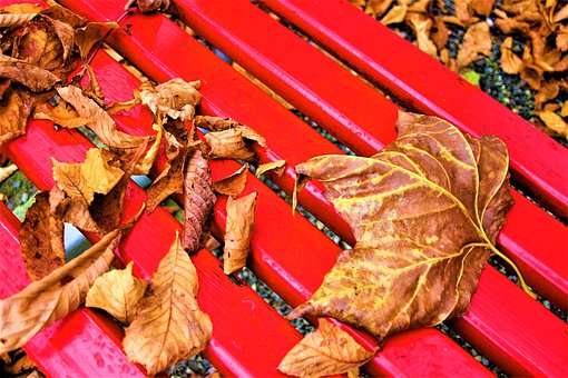 Bench, October, Foliage, Autumn Gold, Rain