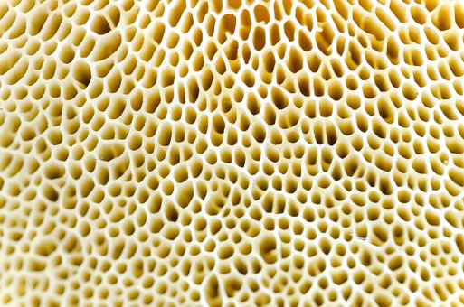 Macro, Mushroom, Natural, Fungi, Fungus, Nature
