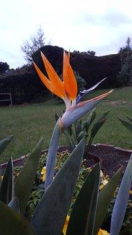 Exotic Flower, Bird Of Paradise, Nature, Garden