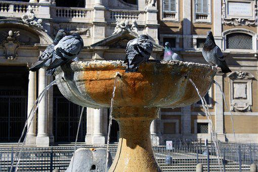 Italy, Rome, Fountain, Pigeons, Architecture, Old Town