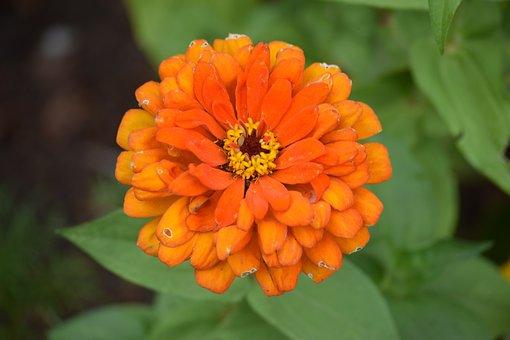 Nature, Summer, Plant, Green, Blossom, Orange Flower