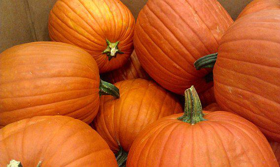 Pumpkins, Halloween, Autumn, Holiday, October, Orange