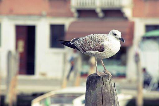 Bird, Seagull, Water Bird, Close, Fly, Port, Waterfowl