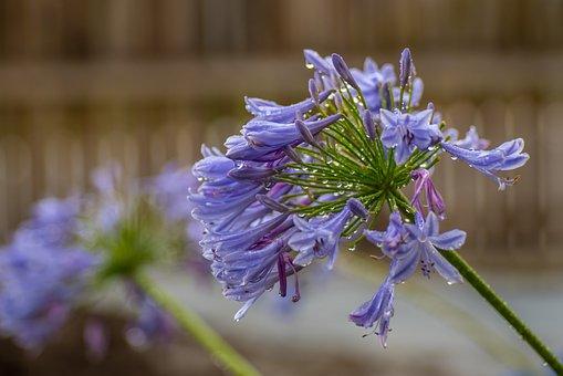 Rain, Raindrops, Nature, Wet, Water, Violet, Purple