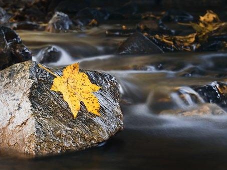 Autumn, Autumn Colours, Bach, Autumn Forest
