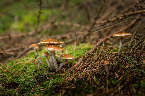 Forest, Forest Floor, Moss, Autumn, Mushroom, Green
