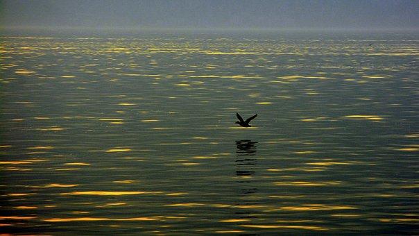 Fly, Lake, Water, Bird, Sunset