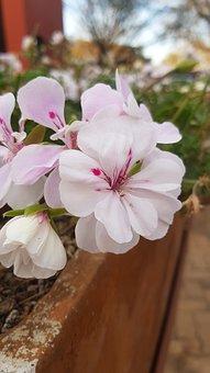 Flowers, Plants, Garden, Floral, Botanical, Blossom