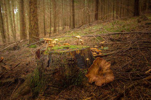 Tree Stump, Brown, Green, Tribe, Nature, Wood, Autumn