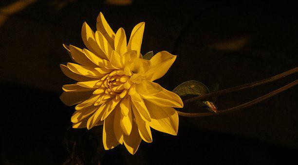 Flower, Garden, Wild Flower, Plant, Colombia