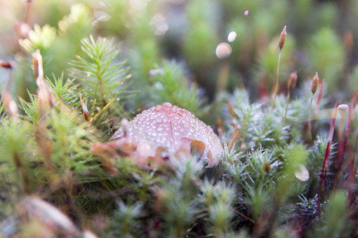 Fungus, Vegetation, Canada