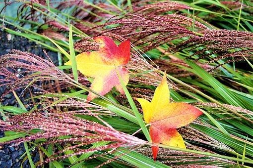Grass, Para, Wet, Autumn, Foliage, Park, Rain, Nature