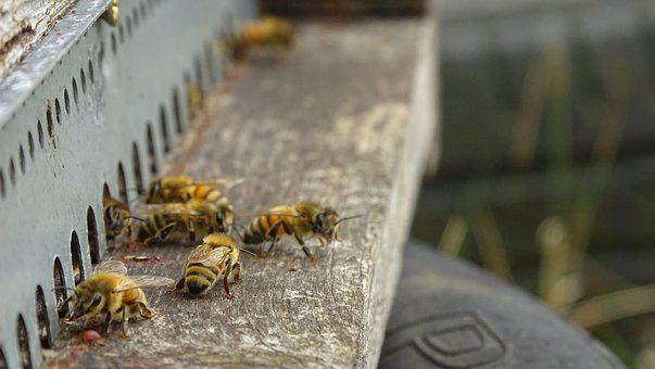 Bees, Hive, Honey, Animals, Beekeeping, Nature