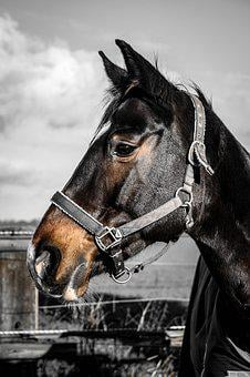 Warmblut, Horse, Mare, Pasture, Animal, Farm, Mammal