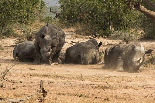 Rhino, Africa, Safari, Big Game, National Park, Mammal