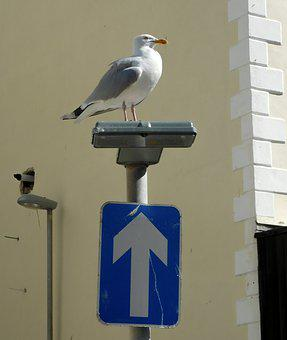 Seagull, Road Sign, One-way Road, City