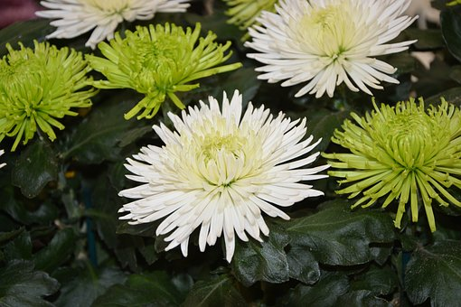 Flowers, White Flowers Green, Offer, Nature, Petals