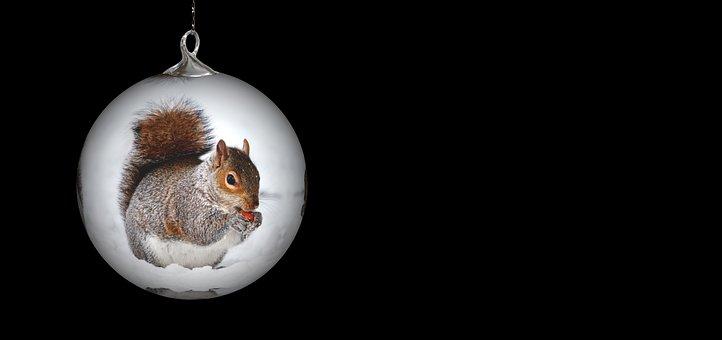 Christmas Ornament, Squirrel, Christmas Ornaments
