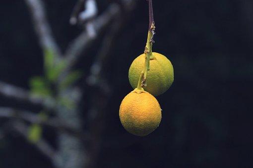 Tree, Lemons, Alone, Solitude, Couple, Darkness