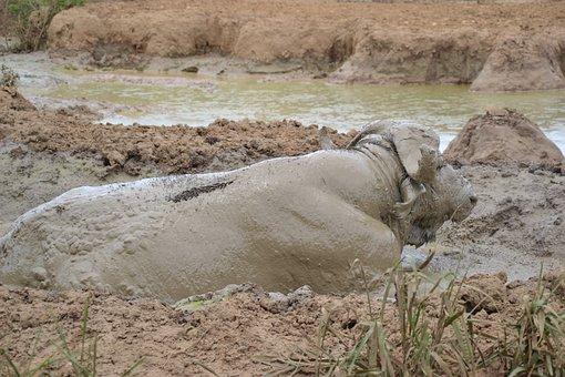 Wildlife, Uganda, Animal, Safari