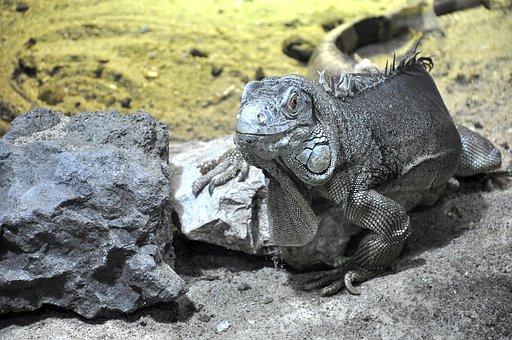 Lizard, Reptile, Animals, Temple, Dragon, Dinosaur