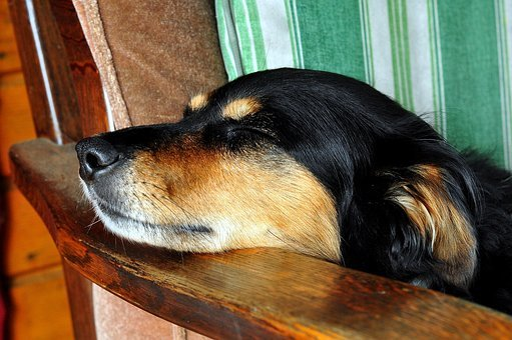 Dog, Dream, Animal, Sleeping, Rest, Laziness, Coat