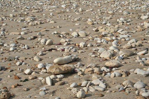 Pebbles, Shells, Beach