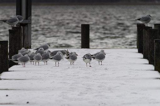 All Saints, Cold, Winter, Water, Web, Lake, Bird, Birds