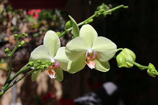 Orchid, Flower, Garden, Floral, Blossom, Nature, Plant