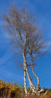 Tree, Sky, Fall, Nature, Blue, Branches, Job