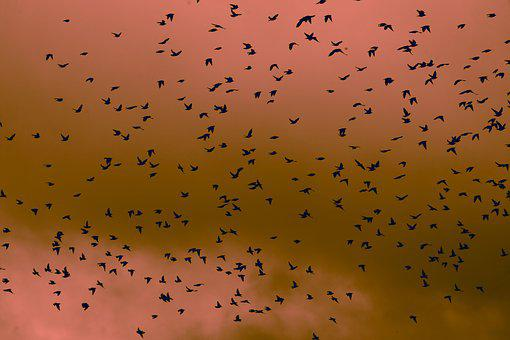 Birds, Sky, Colours, Nature, Fly, Freedom, Flying