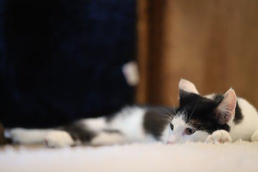 Cat, Animal, Pet, Cute Cat, Young Cat, Domestic Cat
