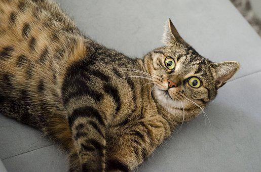 Cat, Surprised, Eyes, Cat's Eyes, Domestic Cat, Kitten
