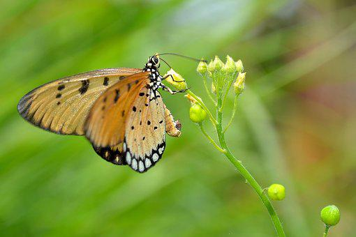 Butterfly, Wildlife, Macro, Nature, Animal, Insect