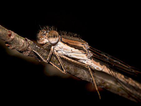 Dragonfly, Hawker, Insect, Close, Nature, Macro