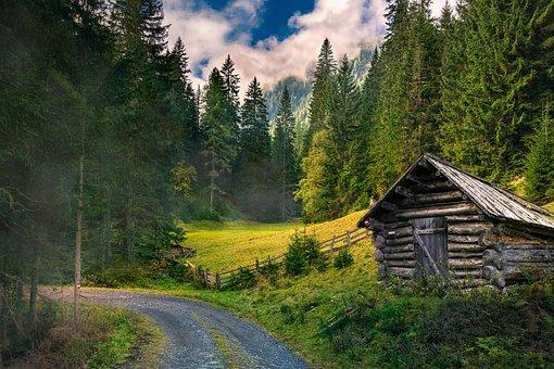 Landscapes, Forest, Nature, Autumn, Mood, Autumn Light