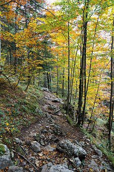 Forest, Nature, Monte Tamaro, Forests, Landscape, Trees