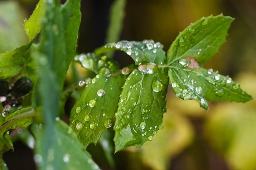 Plant, Green, Water Drop, Nature, Leaf