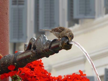 Mus, Water, Fountain, Switzerland, Drinking, Red