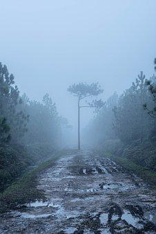 Fog, Nature, Waterfall, Thailand, Sky, Rock, Tree