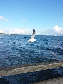 Seagull, Fly, Water Bird, Nature, Birds, Sky, In Flight