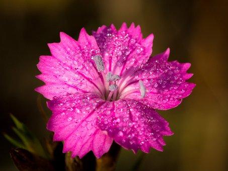 Flower, Small, Small Flower, Macro, Spring, Wild Flower
