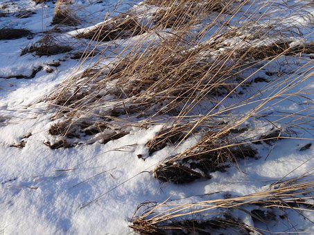 Winter, Grass, Frost, Snow, Nature, Frozen, Wintry