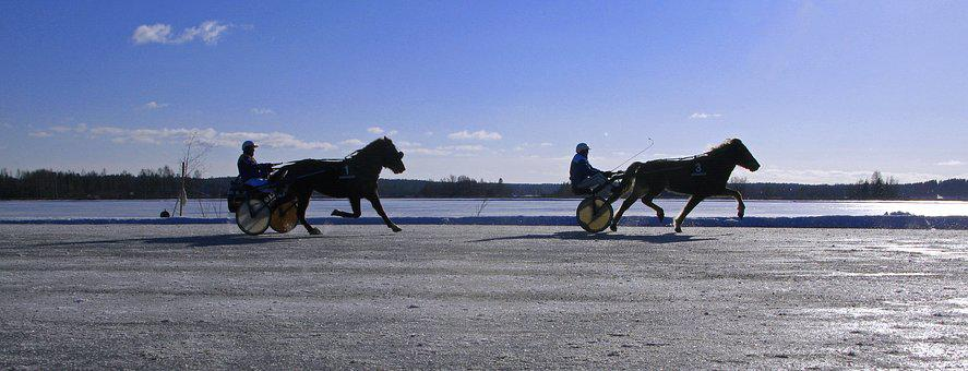 Winter, Horse, Trotting, Ice, Frozen, Lake, Finland