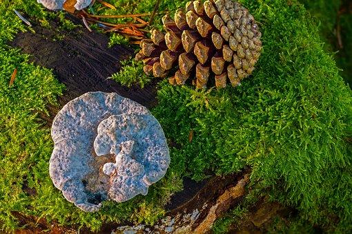 Mushroom, Wood Fungus, Moss, Tree Fungi, Pine Cones
