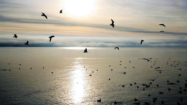Morning, East, Birds, Glow, Peace Of Mind, Autumn, Lake