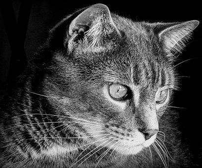 Cat, Cats, Feline, Felines, Eyes, Nature, Animal